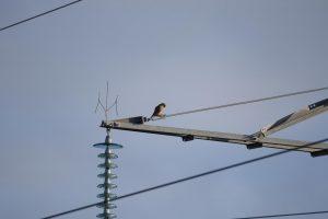 Pavojingose vietose – daugiau apsaugos paukščiams