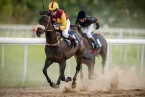 Dešimt dalykų, kuriuos reikia žinoti, ruošiantis į žirgų lenktynes