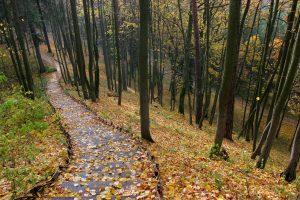 Gamta jau gyvena ne tik švelniuoju rudeniu