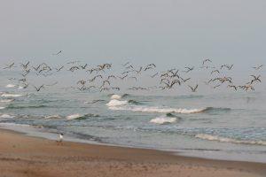 Premjeras Jūros šventėje: mes – bendrakeleiviai, einantys Baltijos keliu