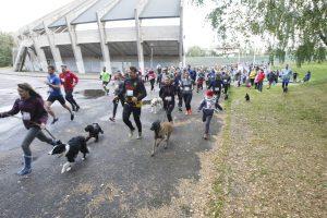 Bėgančius šunis lydėjo žirgai