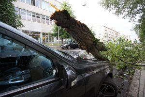 Lietuvą siaubė audra: per avariją dėl nuvirtusio medžio nukentėjo žmogus