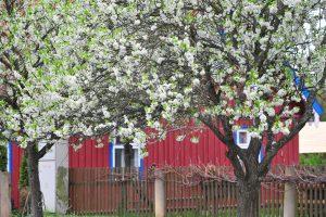 Lietuvoje atidaromas kaimo turizmo sezonas