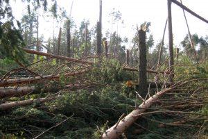 Pernykščio škvalo Alytaus rajone nuostoliams padengti – 72 tūkst. eurų