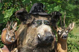 Ministerija dėl medžioklių apskundė keliasdešimt Seimo narių ir urėdų