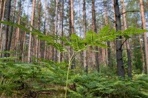 Profesorius: Lietuvos miškų būklė gerėja