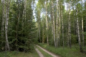 Pareigūnai miškuose ieškojo pasiklydusių grybautojų