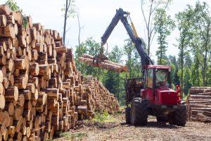 Neteisėtai iškirstos medienos – trečdaliu mažiau