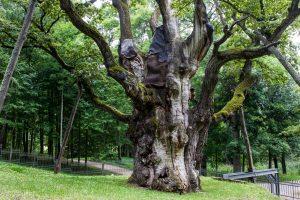 Renkame Metų medį