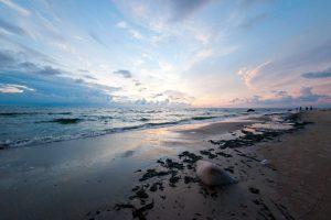 Jūra išskalavo senovinio burlaivio liekanas