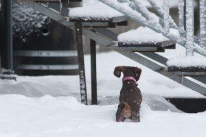 Ugniagesiai išgelbėjo vamzdyje įstrigusį šunį ir prišalusią gulbę