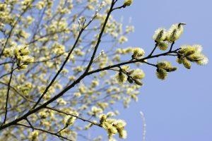 Dar pakentėkite: ateinančią savaitę laukia pavasariškos šilumos pliūpsnis