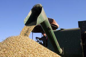 Žadamas didesnis grūdų eksportas leis pasiūlyti ūkininkams geresnes supirkimo kainas