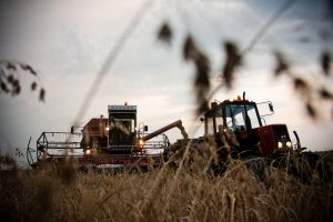 Derlius – ne rekordinis, bet turėtų užtekti