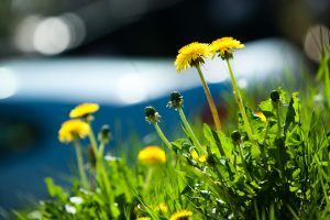 Savaitgalis – puiki proga pajusti vasarą