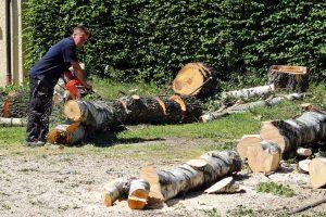 Ar žinojote, kad jau reikia leidimo norint pjauti medį net ir savo sklype?