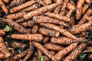 Lietuviškų morkų ir svogūnų derlius pasiekė parduotuvių lentynas