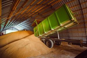 Ministras dėl smukusio BVP kaltina grūdų derlių