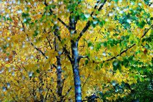 Orai: atkeliauja vėsa ir rudeniški lietūs