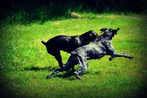 Rašytojo E. Malūko sodyboje – medžioklinių šunų paroda