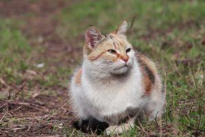 Kam pavojingos beglobės katės?