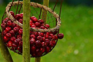 Žagarės vyšnių festivalis: kaliausių plukdymas ir puodų instaliacija