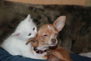 Rinkliavos už daugiabučiuose laikomus šunis ir kates nebeliks?