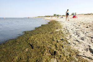 Baltijos jūrai gresia mirtis