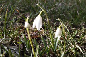 Pavasaris į pajūrį neskuba