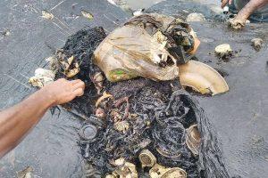 Banginio skrandyje rasta 115 plastikinių puodelių ir net paplūdimio šlepečių