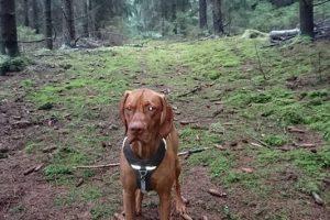 Fejerverkų išsigandęs ir pabėgęs šuo rastas: šeimininkas dėkoja už pagalbą
