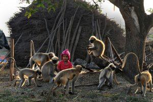 Maugliu pramintas dvimetis susidraugavo su beždžionėmis