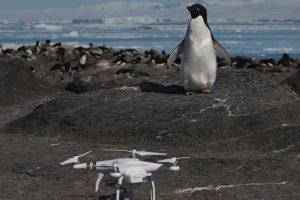 Mokslininkai apstulbo nuošalioje vietovėje atradę milžinišką pingvinų koloniją