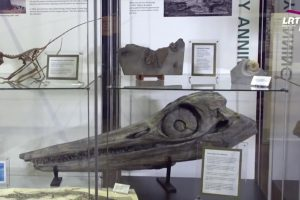 Kaip savamokslė fosilijų medžiotoja padėjo iššifruoti Žemės praeitį?