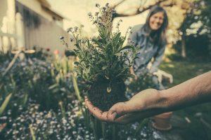 Specialistė įvardijo, ką būtina turėti sodo vaistinėlėje