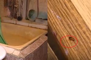 Bendrabutyje gyvenančių studentų kasdienybė – tarakonai ir blakės