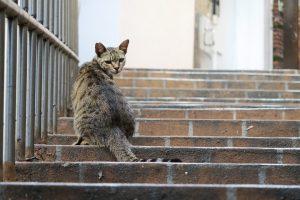 Katinas namo pas šeimininką sugrįžo po 18 metų