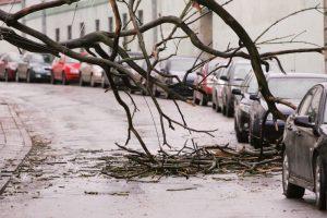 Stipraus vėjo padariniai – ugniagesiai 32 kartus vyko šalinti nuvirtusių medžių