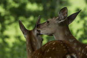 Leista medžioti gerokai daugiau žvėrių nei praėjusį sezoną
