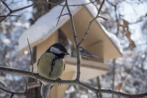 Artėjant žiemai metas pasirūpinti sparnuočiais