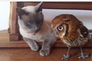 Stulbinanti katino ir pelėdos draugystė