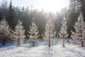 Aplinkos ministras siūlo įkurti vieną miškų urėdiją