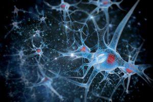 Kamieninės ląstelės: ateities medicinos stebuklas