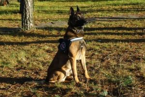 Kontrabandininkų siaubas – pasieniečių šuo Ferro