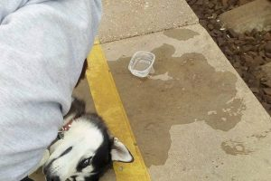 Žiaurus traukinio konduktoriaus poelgis: šunį išmetė ir paliko likimo valiai