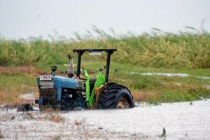 Viceministras: nuo liūčių nukentėję ūkininkai paramos gali tikėtis dar šiemet