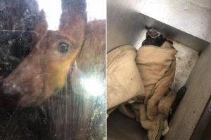 Šiurpūs vaizdai: apleistame name – neprižiūrėti šunys