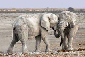 Kas labiausiai naikina gamtos paveldą?