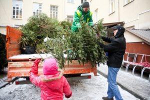 Skelbiamos vietos, kur Kaune bus galima palikti kalėdines eglutes