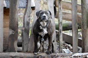 Žiaurus elgesys su gyvūnais nesiliauja: pakorė šunį, nes šis garsiai lojo